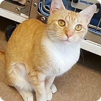 Adopt A Pet :: Talulah aka Toulouse - Chesapeake, VA