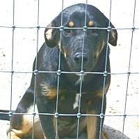 Adopt A Pet :: Baby Bop - Mexia, TX