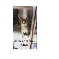 Adopt A Pet :: JAMES - Northfield, OH