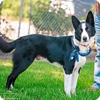 Adopt A Pet :: KIBBLE - Corning, CA