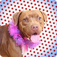 Adopt A Pet :: Cinderella - Chico, CA