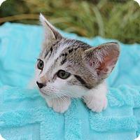 Adopt A Pet :: TIMONE - Newport Beach, CA