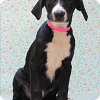 Adopt A Pet :: Amalie - Waldorf, MD