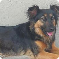 Adopt A Pet :: Chai - San Diego, CA