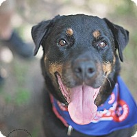 Adopt A Pet :: Ethan - Little Rock, AR