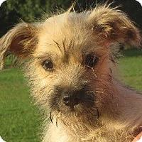 Adopt A Pet :: Chan - Greenville, RI