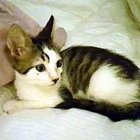 Adopt A Pet :: Molly - Woodland Hills, CA