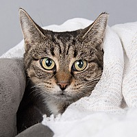 Adopt A Pet :: Irma - Wilmington, DE