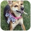 Photo 1 - Basenji/Terrier (Unknown Type, Small) Mix Dog for adoption in Overland Park, Kansas - J.J.
