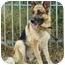 Photo 3 - German Shepherd Dog Mix Dog for adoption in Los Angeles, California - Sage von Sullivan