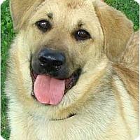 Adopt A Pet :: CHARLEE - Wakefield, RI