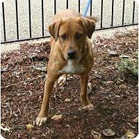 Adopt A Pet :: Lizzy - Toronto/Etobicoke/GTA, ON