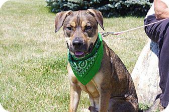 Labrador Retriever/Shepherd (Unknown Type) Mix Dog for adoption in Elyria, Ohio - Houston