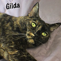 Domestic Shorthair Cat for adoption in Ocean View, New Jersey - Gilda
