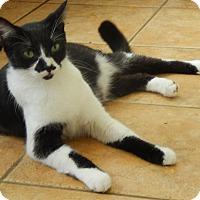 Adopt A Pet :: Radar - New Port Richey, FL