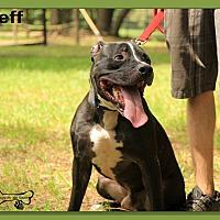 Adopt A Pet :: Jeff - Sarasota, FL