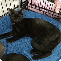 Adopt A Pet :: Priscilla - Speonk, NY