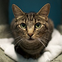 Adopt A Pet :: Jackie - Los Angeles, CA