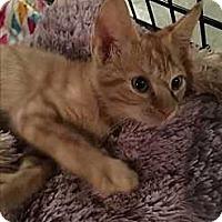 Adopt A Pet :: Whopper - Mount Laurel, NJ