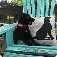Adopt A Pet :: Fletcher - Greeneville, TN