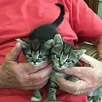 Adopt A Pet :: Sprinkles and Tipsy (cl) - Alpharetta, GA