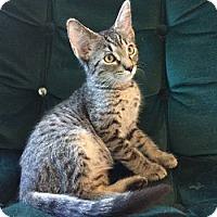 Adopt A Pet :: Jax - Davis, CA