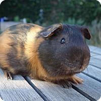 Adopt A Pet :: Henry - Fullerton, CA