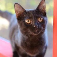 Adopt A Pet :: Luna - Dahlonega, GA