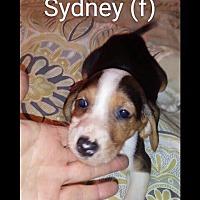 Adopt A Pet :: Sidney - Brunswick, ME
