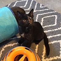 Adopt A Pet :: Zena - Butner, NC