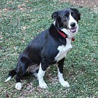 Adopt A Pet :: MILEY - Corning, CA