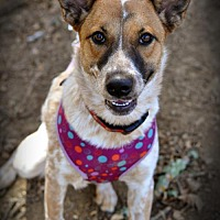 Adopt A Pet :: Kanga - Milpitas, CA