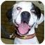 Photo 1 - Boxer Dog for adoption in Scottsdale, Arizona - Esmeralda