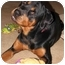 Photo 4 - Rottweiler Dog for adoption in Cedar Creek, Texas - Rex