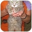 Photo 3 - Domestic Mediumhair Cat for adoption in Ottawa, Illinois - Emily