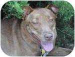 Terrier (Unknown Type, Medium)/Australian Kelpie Mix Dog for adoption in Plainfield, Illinois - Jessie
