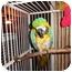 Photo 3 - Macaw for adoption in Vancouver, Washington - ROBERT