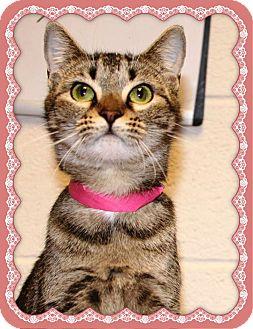 Domestic Shorthair Cat for adoption in Marietta, Georgia - LOUISE