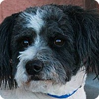 Terrier (Unknown Type, Small) Mix Dog for adoption in Palmdale, California - Buster