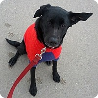 Adopt A Pet :: Val - Hamilton, ON