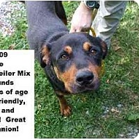 Adopt A Pet :: # 358-09 - ADOPTED! - Zanesville, OH