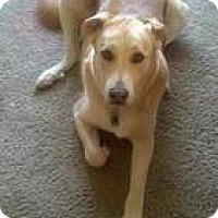 Adopt A Pet :: Parker - Laingsburg, MI