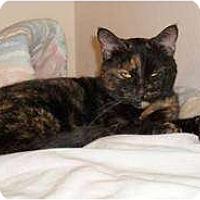 Adopt A Pet :: Momma - Farmington, AR