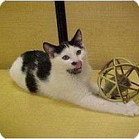 Adopt A Pet :: Jack - Jenkintown, PA