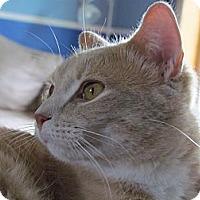Adopt A Pet :: Sox - Douglas, ON