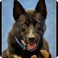 Adopt A Pet :: Tank - Wickenburg, AZ