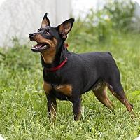 Adopt A Pet :: Leona - Rigaud, QC