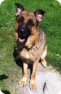 German Shepherd Dog Mix Dog for adoption in Port Hope, Ontario - Rocco