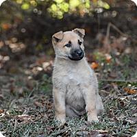 Adopt A Pet :: Kahlua - South Dennis, MA
