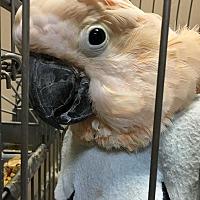 Adopt A Pet :: Cracker - Punta Gorda, FL